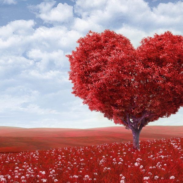 copac inima de mama