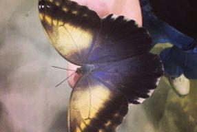 1 iunie memorabil: Cum ar fi să ții fluturi mari pe mână?